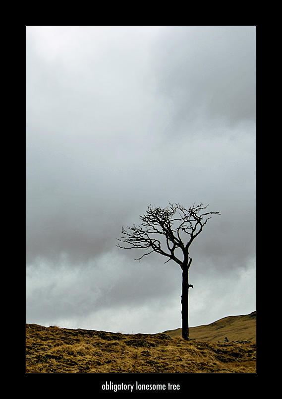 Obligatory Lonesome Tree - I by honz12