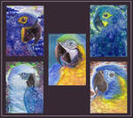 ATC collection: Blue macaws by Phoeline