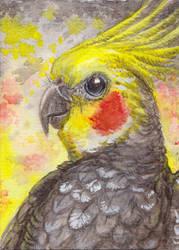 ACEO Kuki the cockatiel
