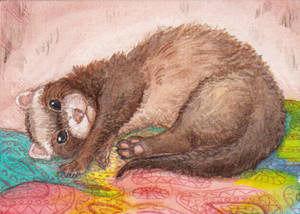 ACEO ferret
