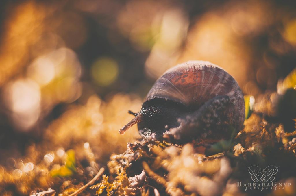 Snail 2015 by xBarbaraG