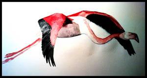 Flamingo by beatyourgreens