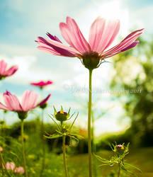 A Flower by derek-k