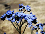 Blue Rue II