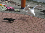 Seagull Wings