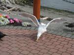 Sea Gull Wings 6