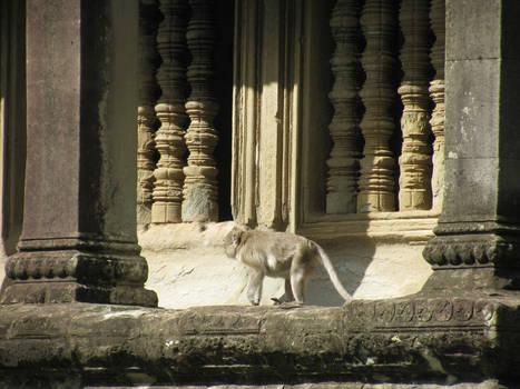Cambodia - Angkor Wat Monkey