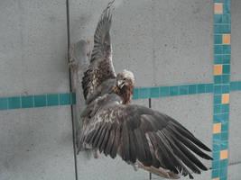 Eagle wings 4 by solarka-stock
