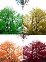 Autumn's Rainbow. by TheRedStranger