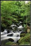 Kennall Vale Nature Reserve