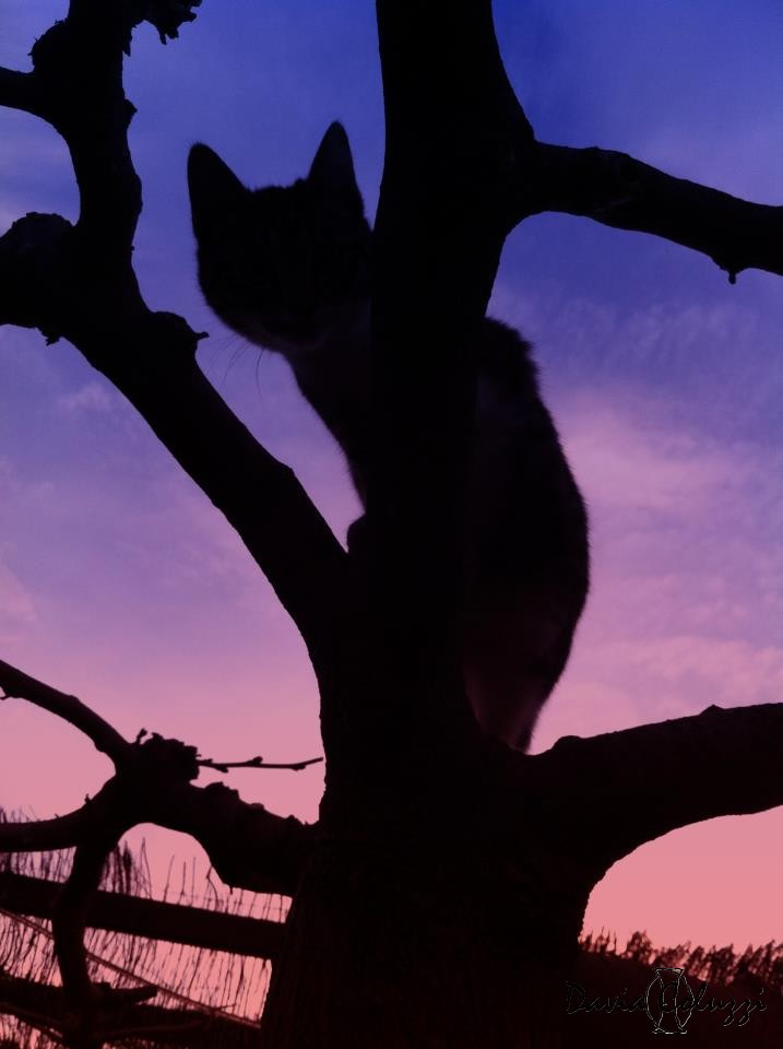 Ending day shadow cat by smaccks