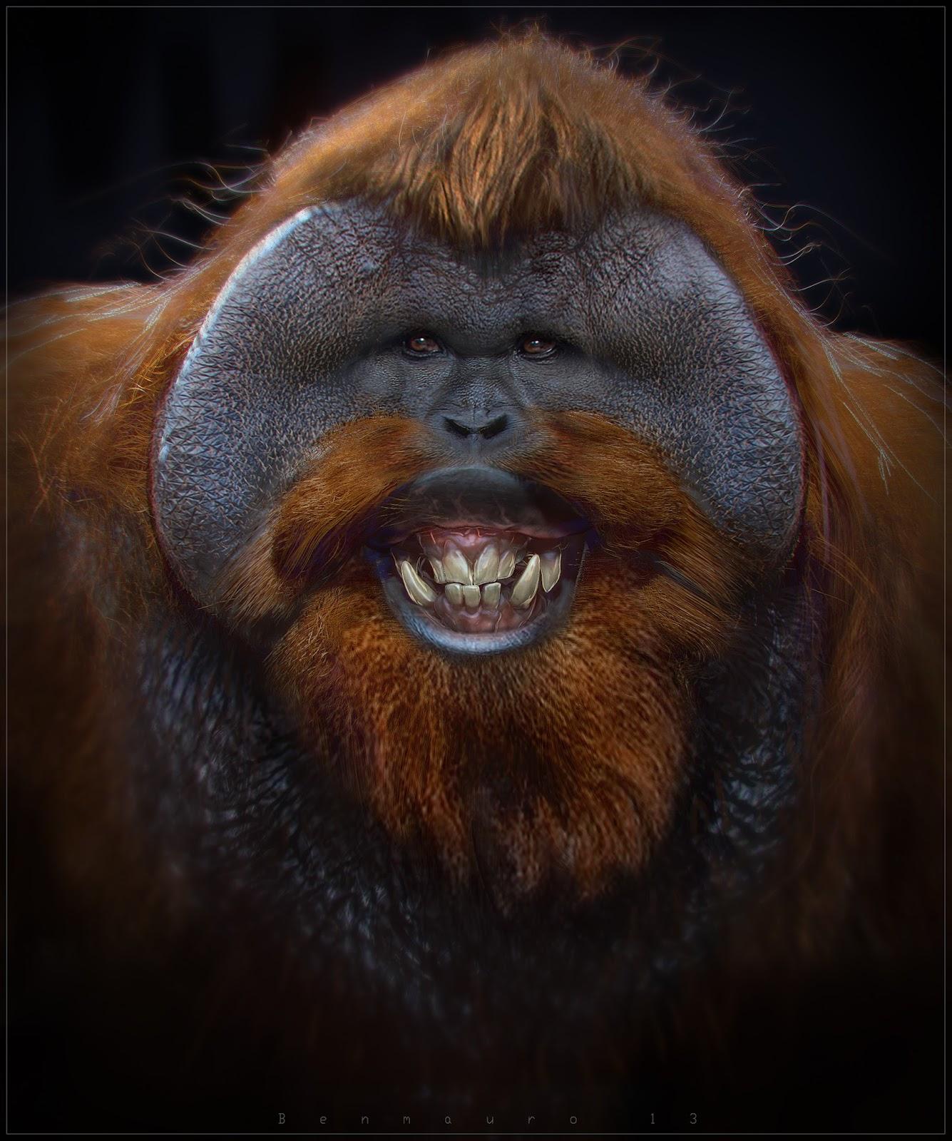 orangutan by benmauro on deviantart