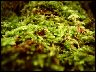 moss - 1 by johnny-PT