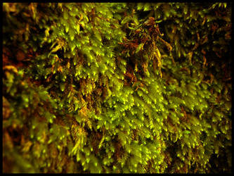 moss 2 by johnny-PT