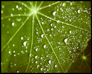 drops on green by johnny-PT