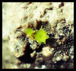 Algae on Rock by johnny-PT