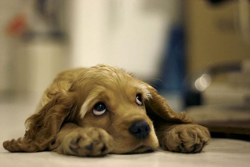 Оприличете предния с картинка Dog_by_truth_truth