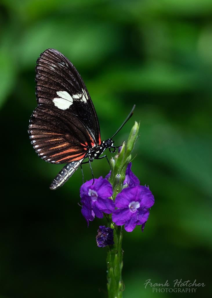Butterfly wonderland 02 by Hatch1921