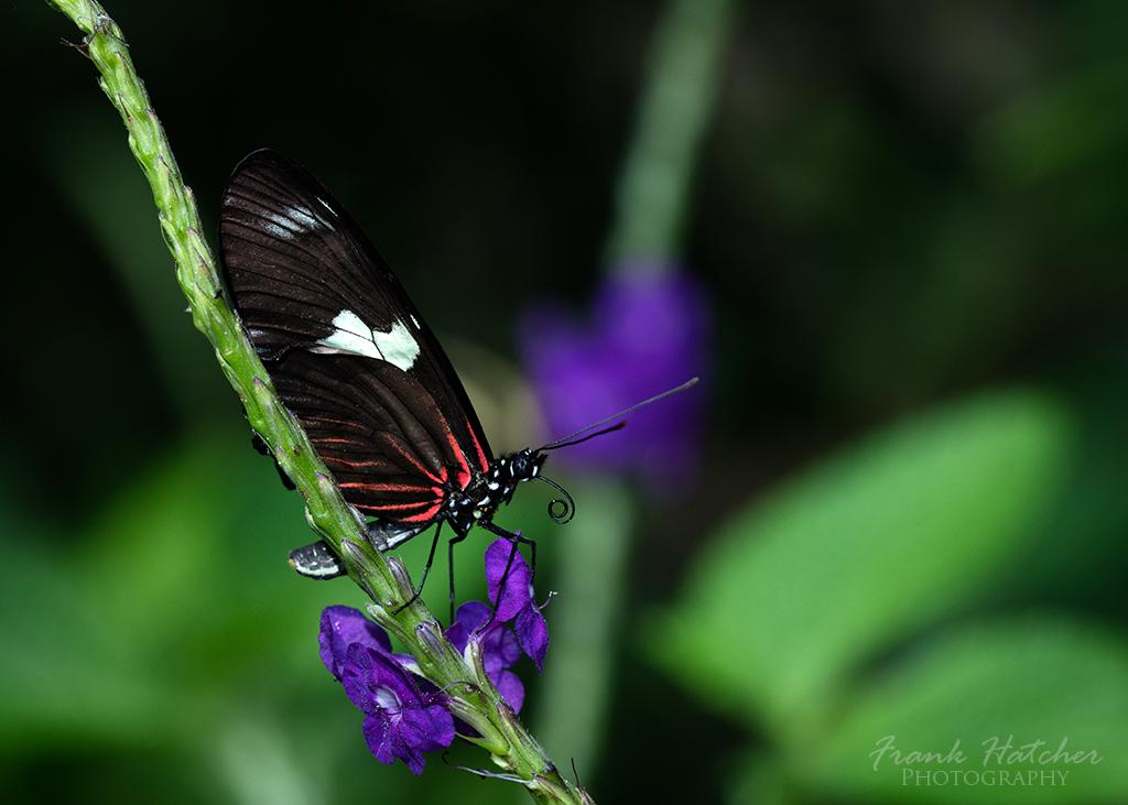 Butterfly wonderland 03 by Hatch1921