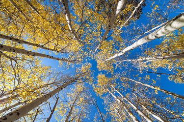 Up in the aspens