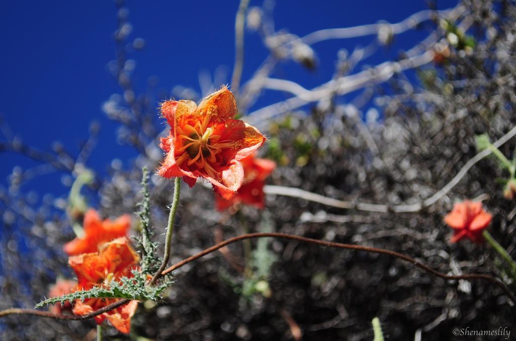 Wild Flowers by SheNamesLily