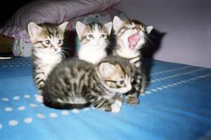 kittens by platontr