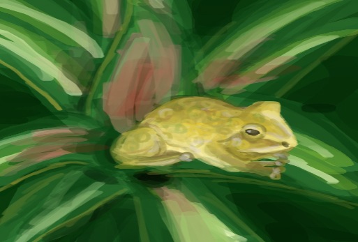 Frog by Ziwon