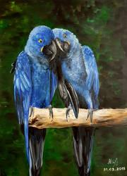 Blue macaws by NikoletaPopova