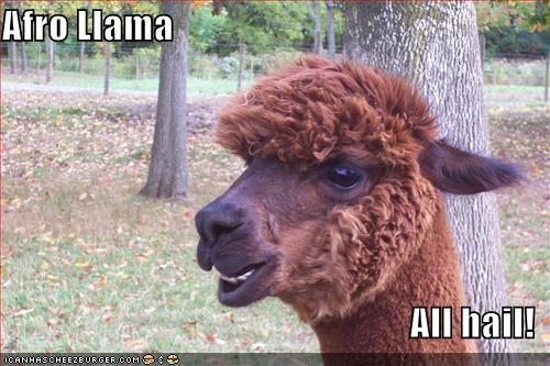 Llamas With Afros Afro Llama by Copen-Lo...