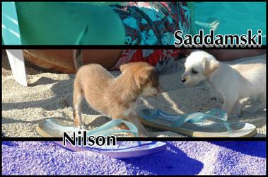 nilson + saddamski