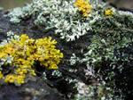 Free Photo Texture - Lichen #1
