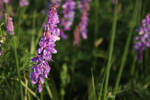 Wild prairie flowers stock #4
