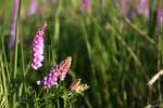 Wild prairie flowers stock #3