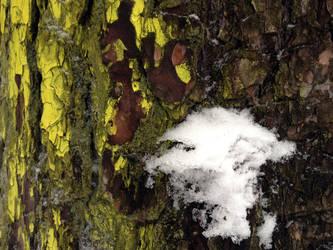 Free photo texture - Snowy pine bark #1 by croicroga