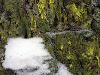 Free photo texture - Snowy pine bark #5 by croicroga