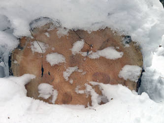 Free photo texture - Timber cut in a snowdrift #1 by croicroga
