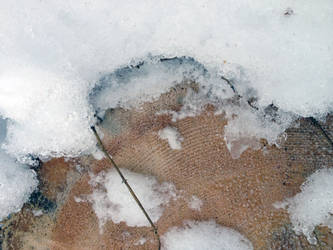 Free photo texture - Timber cut in a snowdrift #2 by croicroga
