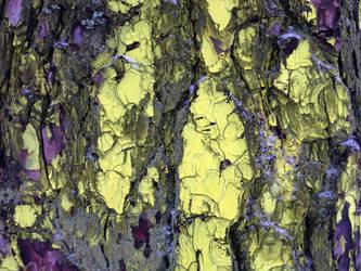 Free photo texture - Snowy pine bark #6 by croicroga
