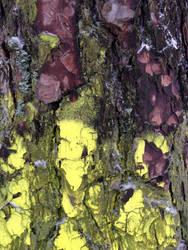 Free photo texture - Snowy pine bark #7 by croicroga