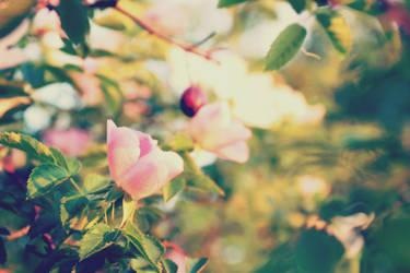 Retro roses by croicroga