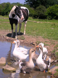 Horse and geese by bagnaj97