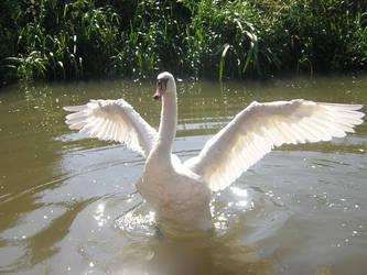 Swan by bagnaj97