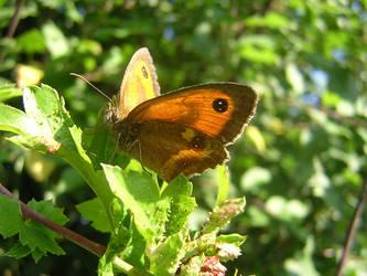 Butterfly by bagnaj97