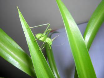 Grasshopper by bagnaj97