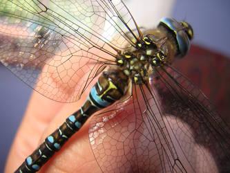 Dragonfly Closeup by bagnaj97