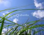 Ubuntu Grass