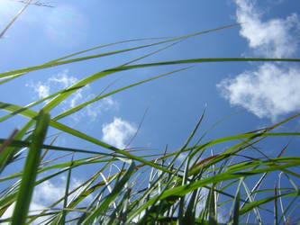 Grass Stock by bagnaj97