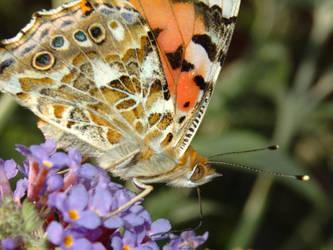 Schmetterling by bagnaj97