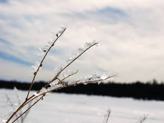 Icy Frond by draconis42