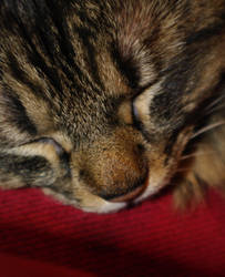 Sleepy Kitty by draconis42